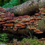 fungi environment importance